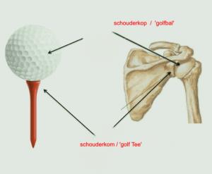 schouder-uit de kom anatomie-metafoor-fysiotherapie-middenweg- amsterdam-oost