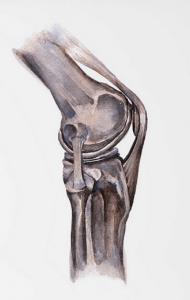 kniegewricht fysiotherapie middenweg amsterdam oost