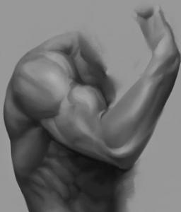 bicepspees klachten fysiotherapie Middenweg